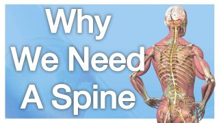 Why We Need A Spine