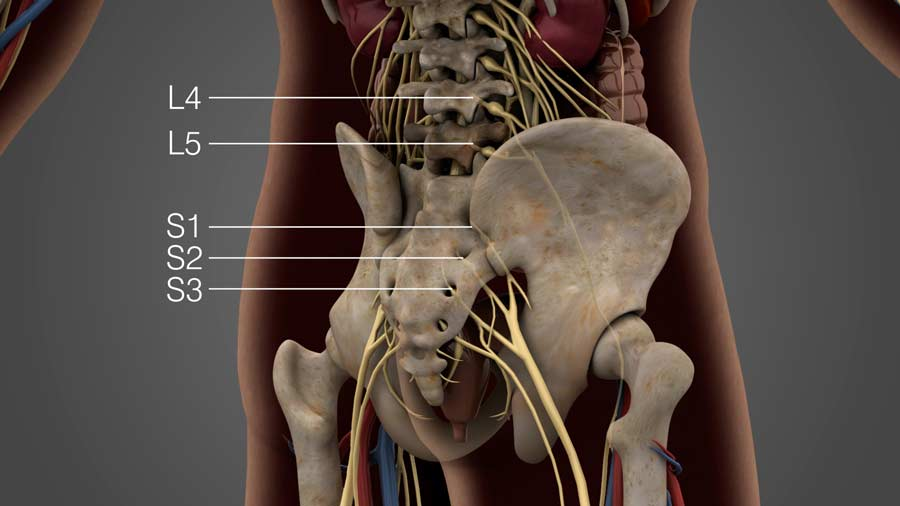 Lumbar nerves