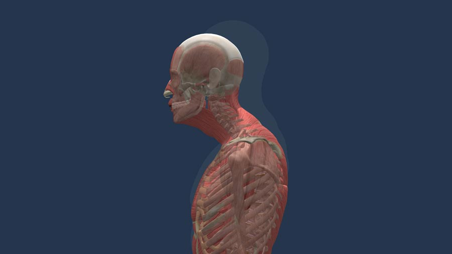 FHP prevention and improving posture