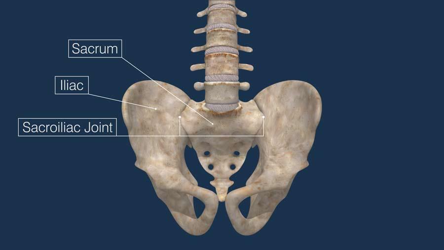 The sacroiliac (SI) joint